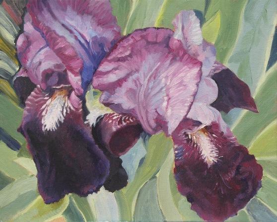 Irises from an urban garden
